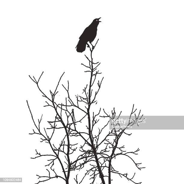 crow perching in tree giving an alarm caw - goth stock illustrations, clip art, cartoons, & icons