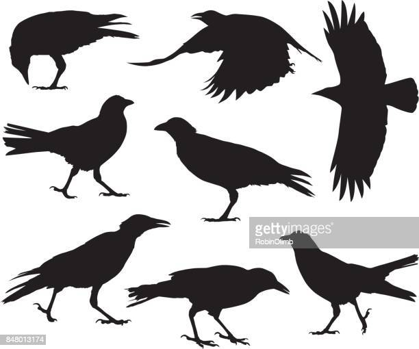 crow silhouettes - spread wings stock illustrations