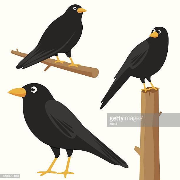 ilustraciones, imágenes clip art, dibujos animados e iconos de stock de crow - cuervo