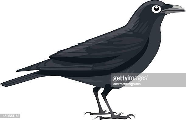 crow - scavenging stock illustrations