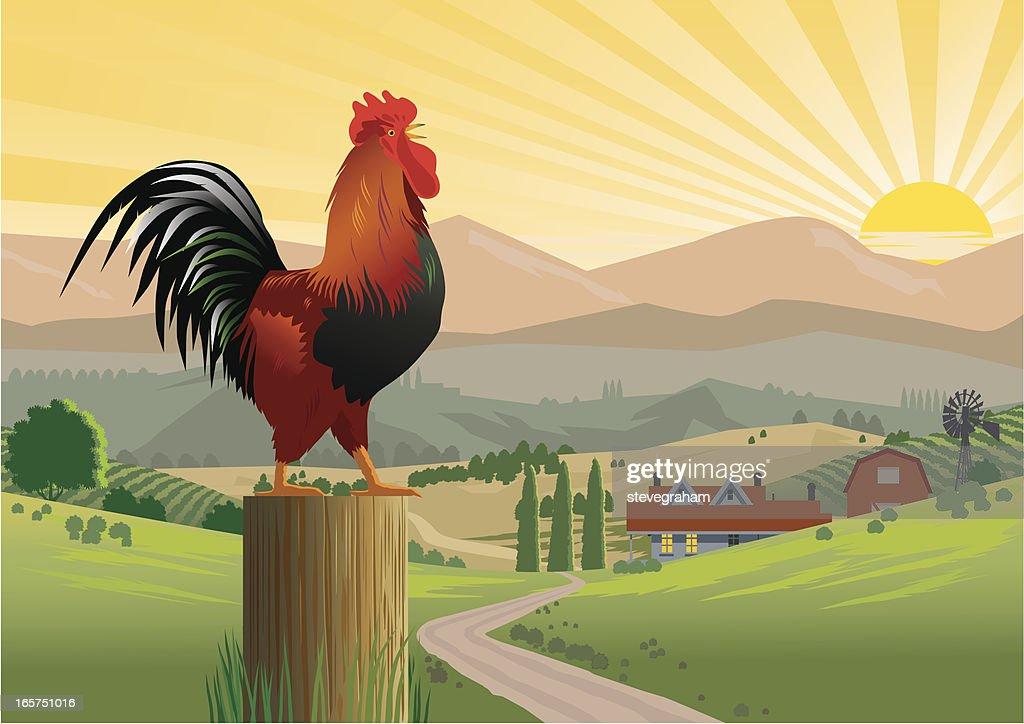 Crowing Rooster in Farmyard