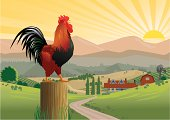 Crowing Rooster in Farmyard