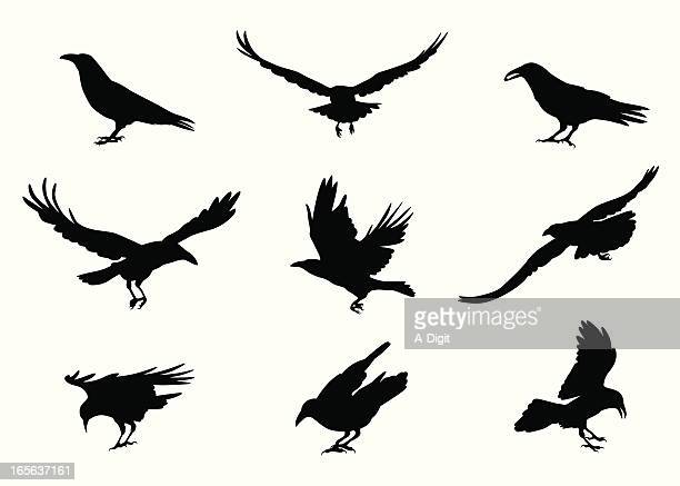 crow-ing vector silhouette - crow stock illustrations