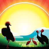Crowned Cranes silhouettes in hot day