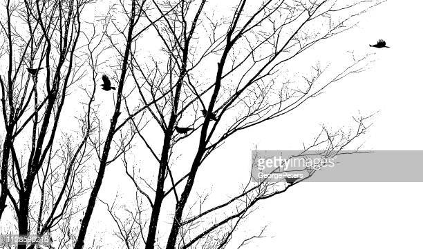 crows flying and landing in winter trees - bare tree stock illustrations