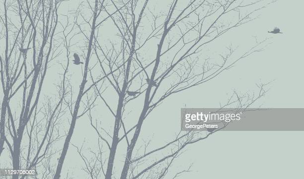 crows flying and landing in winter trees - desaturated stock illustrations, clip art, cartoons, & icons