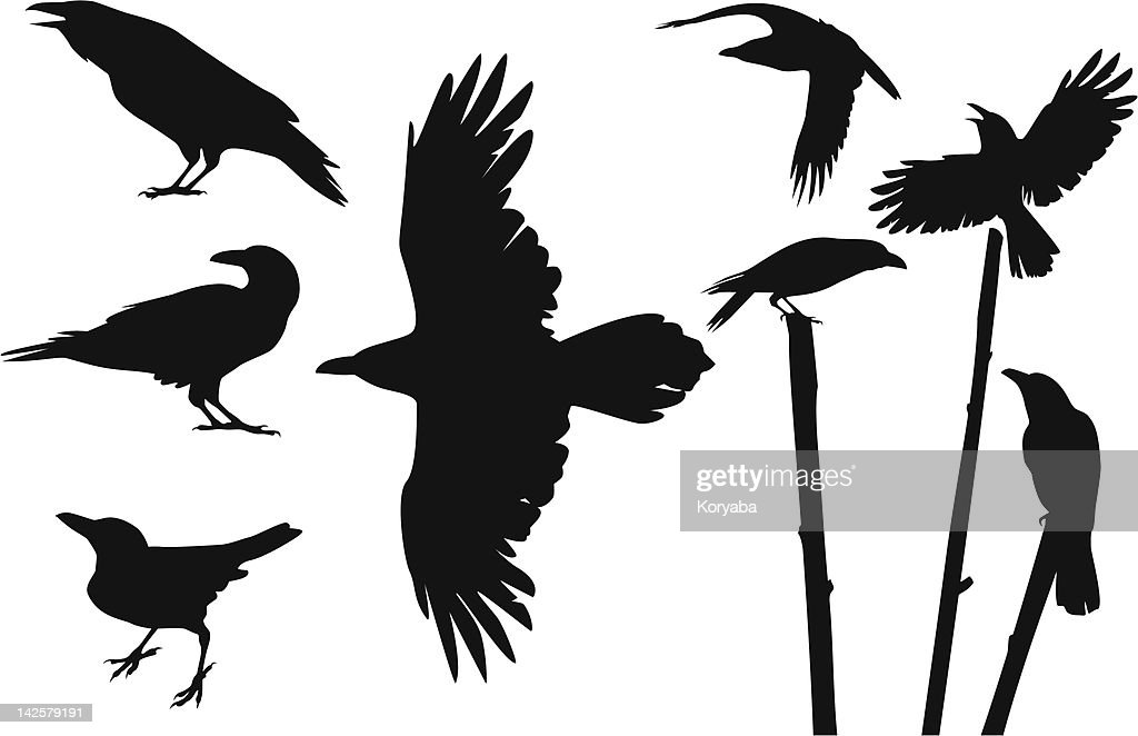 Crows silhouettes