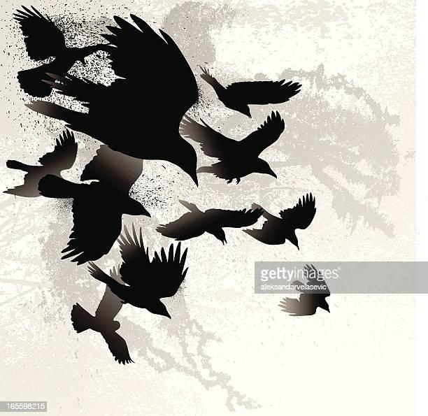 crows - crow bird stock illustrations