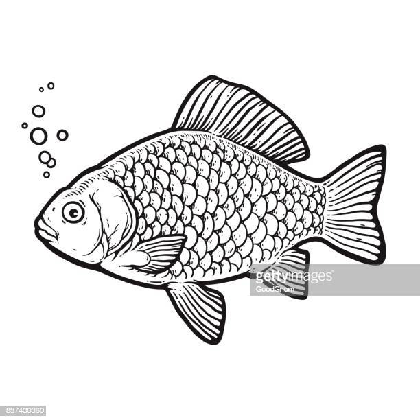 crucian carp - animal scale stock illustrations, clip art, cartoons, & icons