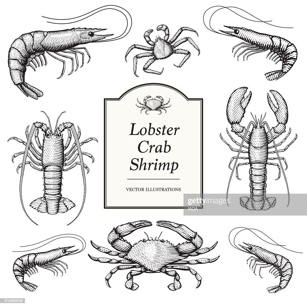 Crustacean in a vintage style