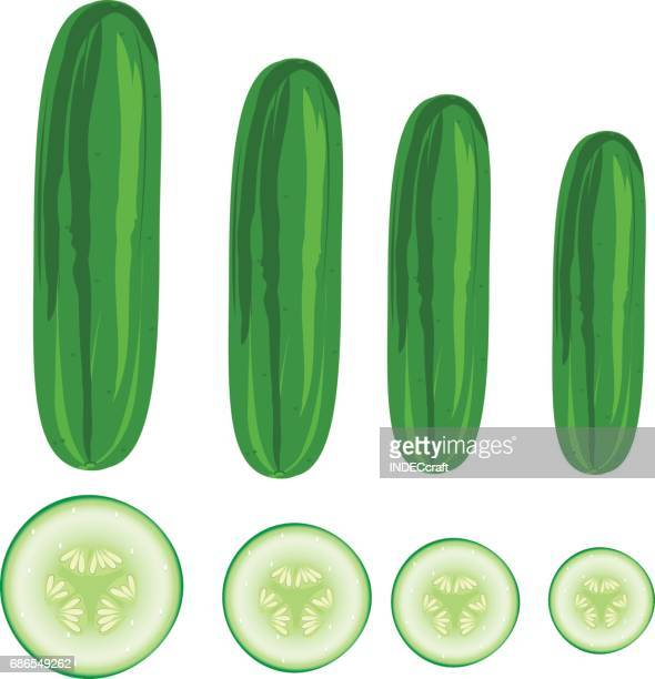 cucumber - cucumber stock illustrations, clip art, cartoons, & icons