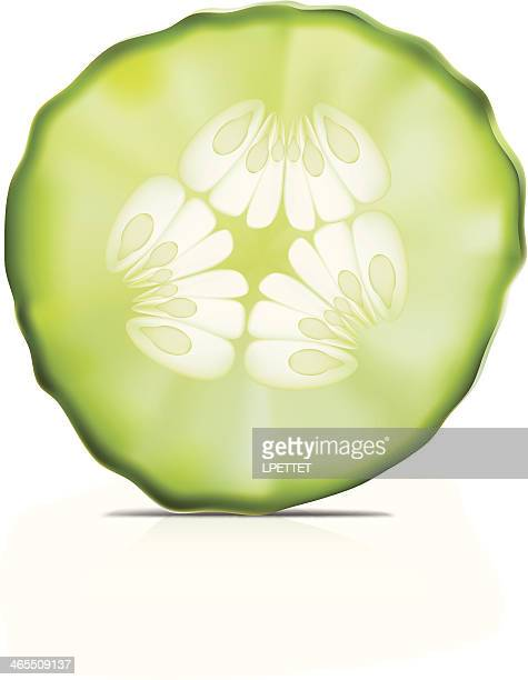 cucumber- vector illustration - cucumber stock illustrations, clip art, cartoons, & icons
