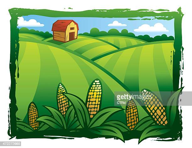 cultivated green fields - corn stock illustrations, clip art, cartoons, & icons
