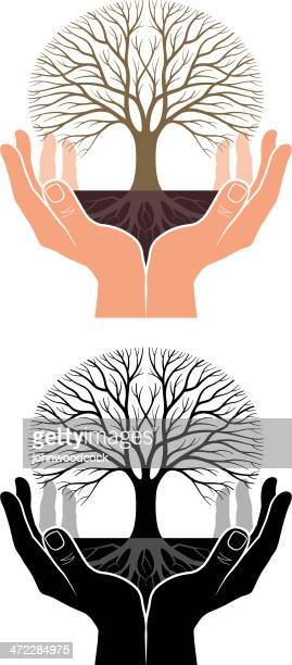 Cupped hands, tree and roots