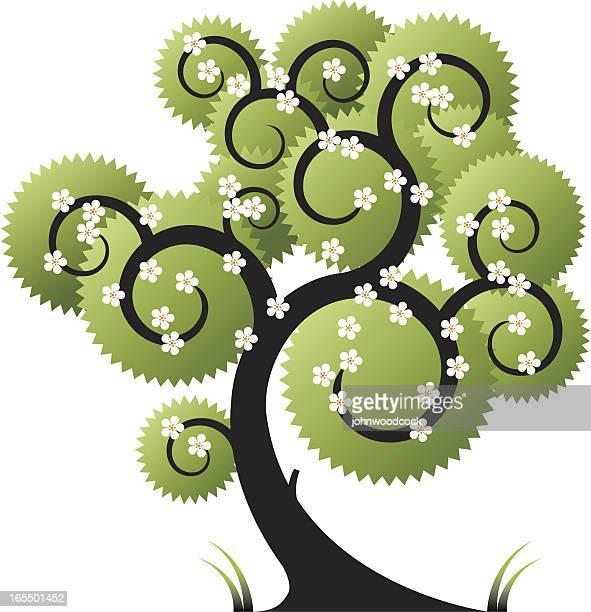 Curly Baum drei