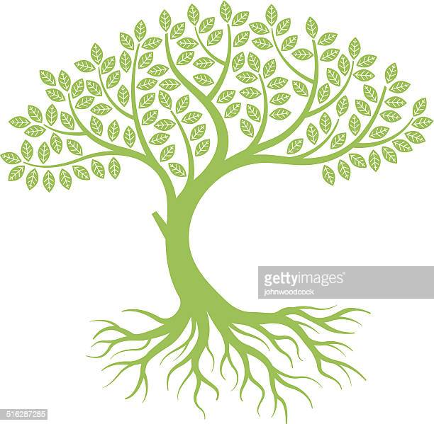 curved tree - root stock illustrations, clip art, cartoons, & icons