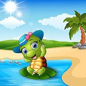 Cute baby turtle on the beach