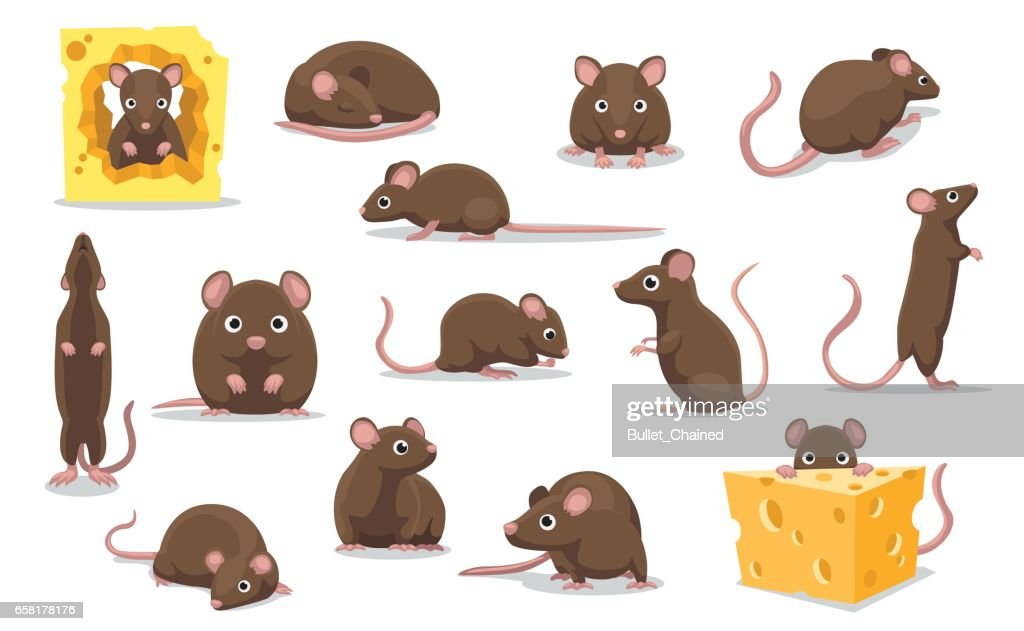 Cute Brown Rat Various Poses Cartoon Vector Illustration