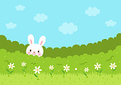 Cute bunny in the bush