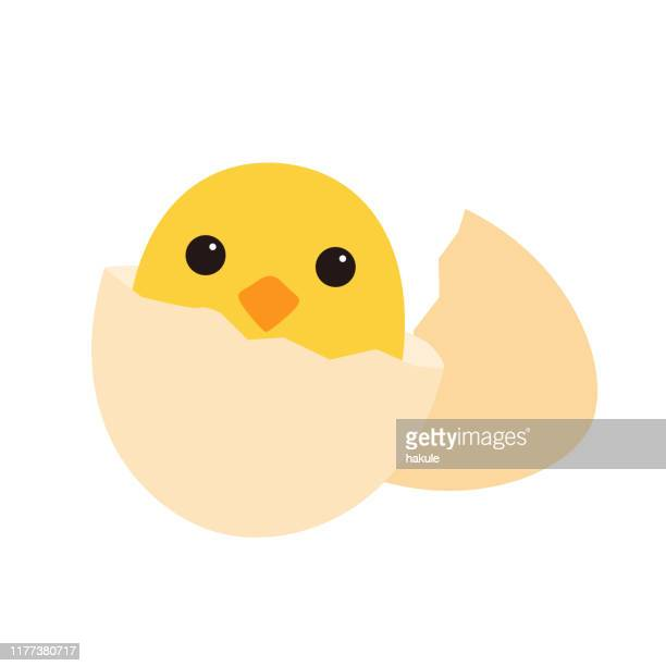 cute cartoon chicken on the egg, flat icon, vector illustration. - easter stock illustrations