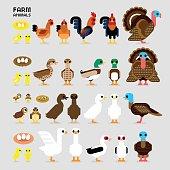 Cute Cartoon Farm Poultry Animals