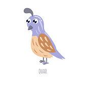 Cute cartoon quail vector illustration.