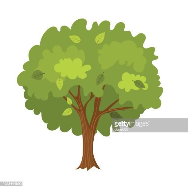 ilustraciones, imágenes clip art, dibujos animados e iconos de stock de árbol de dibujos animados - árbol de hoja caduca