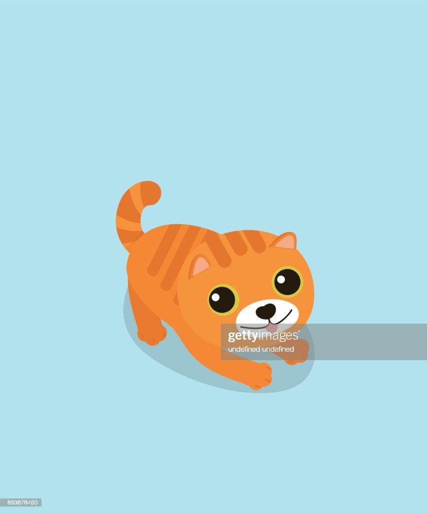 A cute cat on sky blue background