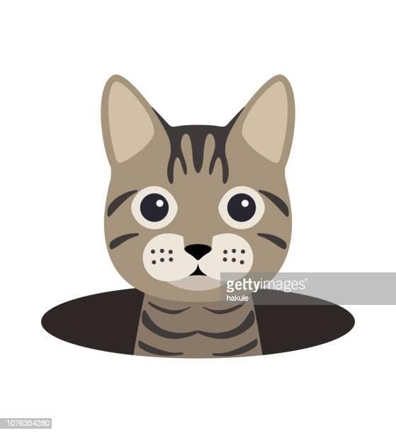 ベクトル図を見て、洞窟にかわいい猫 - ショートヘア点のイラスト素材/クリップアート素材/マンガ素材/アイコン素材