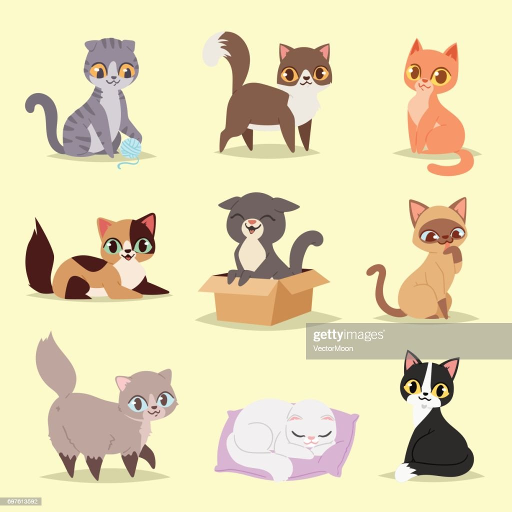 Cute cats kitty pet adorable character different pose vector. Home cats different breeds