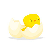 Cute chick hatched vector