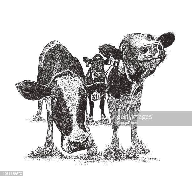 cute cows with funny facial expressions - cow stock illustrations