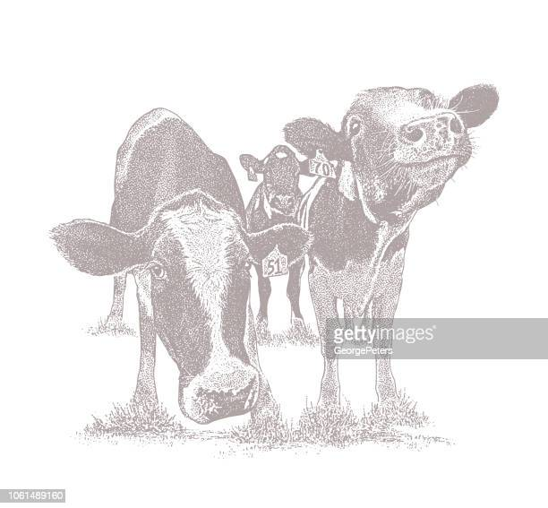 cute cows with funny facial expressions - desaturated stock illustrations, clip art, cartoons, & icons