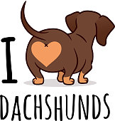 """Cute dachshund dog vector cartoon illustration isolated on white, """"I love dachshunds"""" text caption. Chocolate and tan wiener sausage dog, rear view. Funny doxie butt, dog lovers, pets, animals theme."""