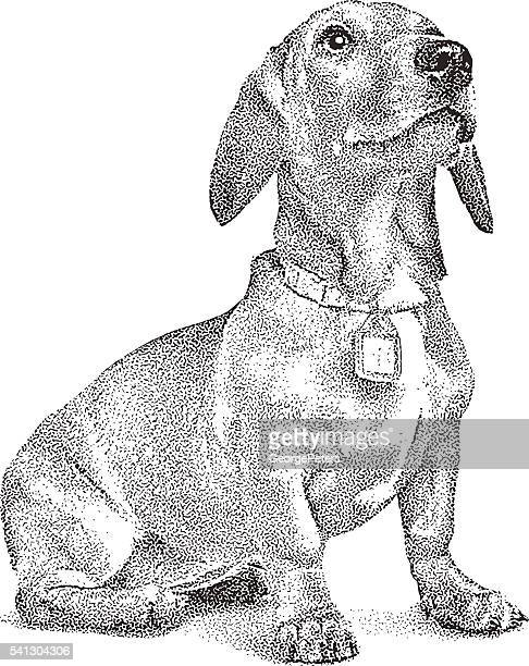 cute dachshund puppy - dachshund stock illustrations