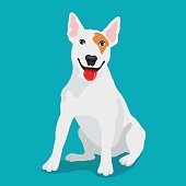 Cute dog Bull-terrier breed