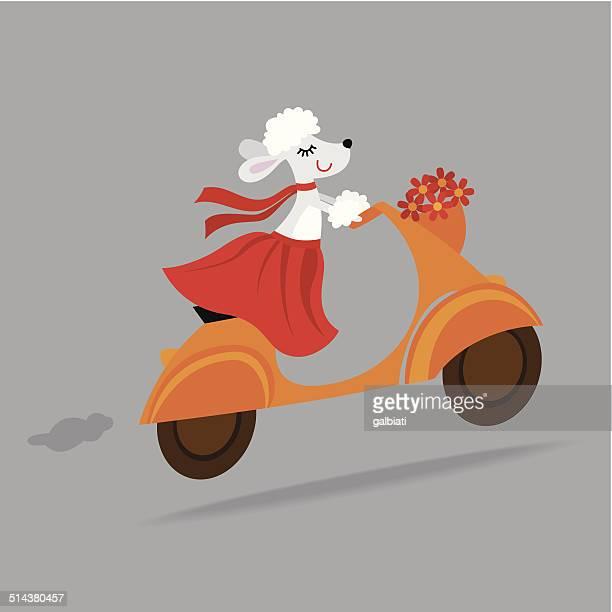 cute dog riding a vespa scooter - vespa stock illustrations, clip art, cartoons, & icons