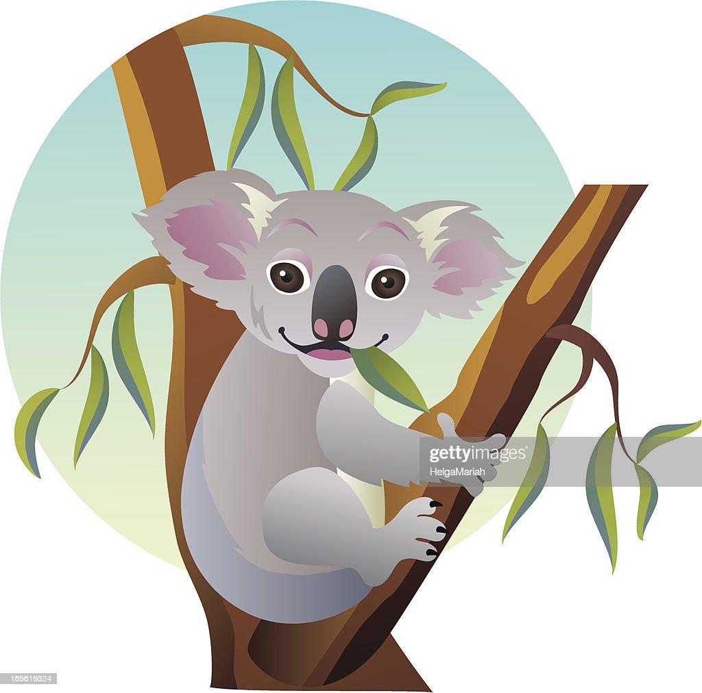 Cute Eating Baby Koala Bear Sitting on Australian Eucalyptus Tree