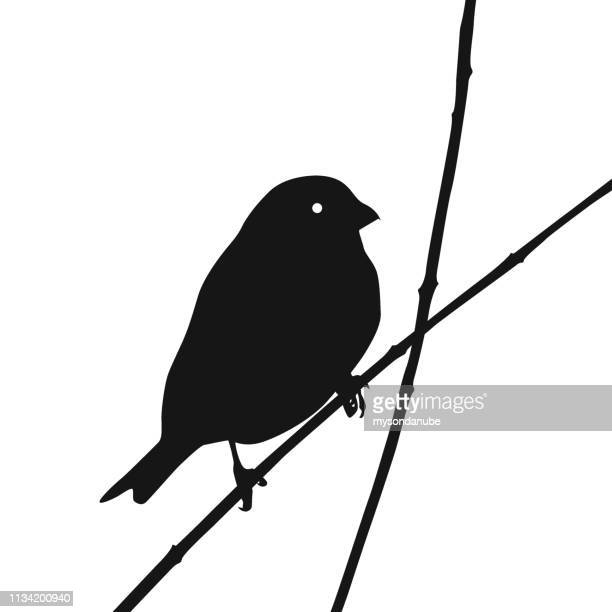 cute euroasian tree sparrow silhoutte resting on tiny branch. - songbird stock illustrations