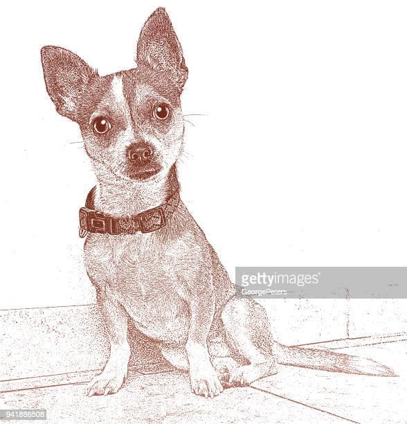 Cute female Chihuahua dog hoping to be adopted