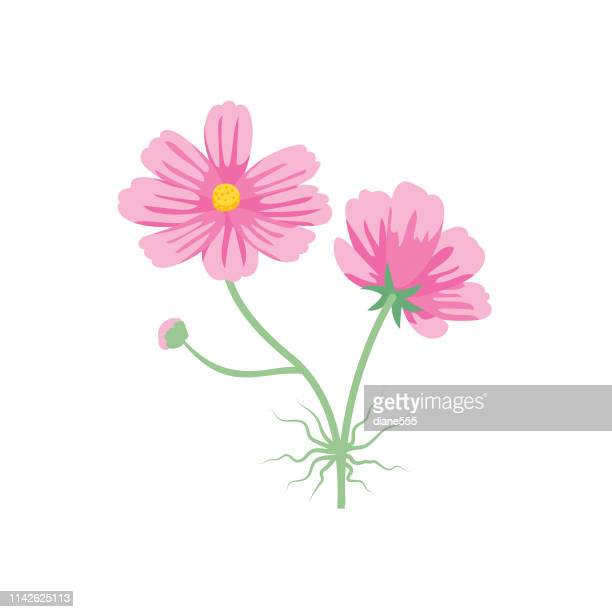 cute flower icon in flat design - cosmos - cosmos flower stock illustrations