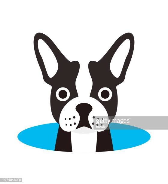 cute french bulldog on the cave,watching, vector illustration - french bulldog stock illustrations
