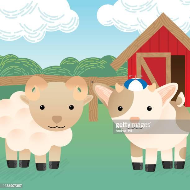 Cute Goat and Ram in the Barn Yard