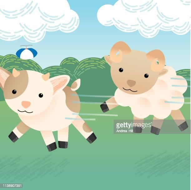 Cute Goat and Sheep Run in Pasture