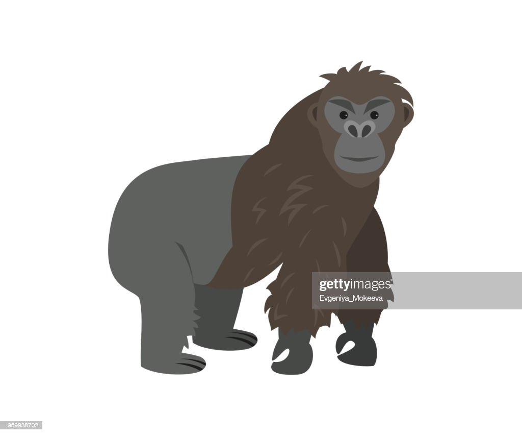 Cute gorilla on white background.