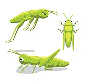 Cute Grasshopper Poses Cartoon Vector Illustration