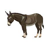 Cute grey donkey. Vector illustration