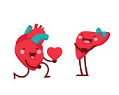 Cute Healthy Romantic Heart Giving Out Love To Liver Cartoon Character Illustration