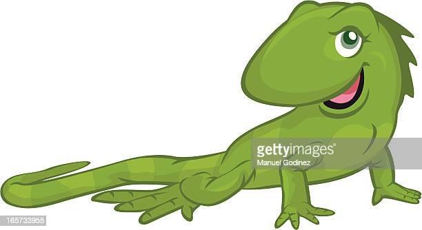 ilustraciones, imágenes clip art, dibujos animados e iconos de stock de linda iguana - iguana