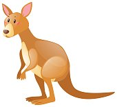 Cute kangaroo on white